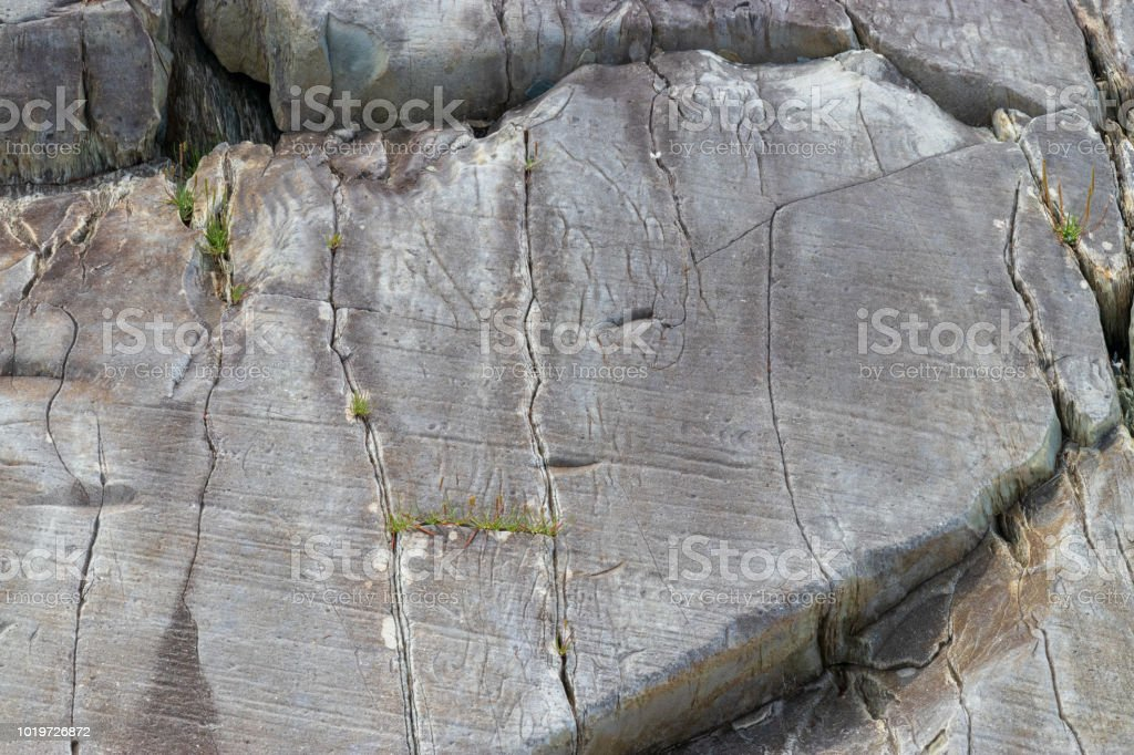 A gray rock outcrop with small plants beginning to grow in the cracks. stock photo