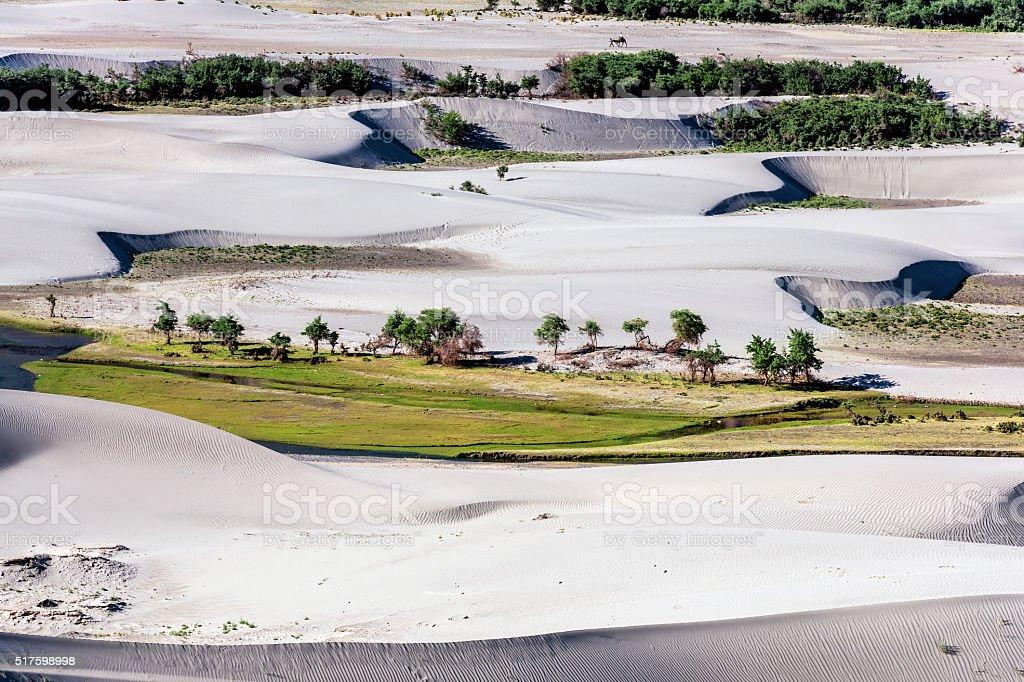 Gray sand dunes in Nubra Valley Ladakh India,Asia stock photo
