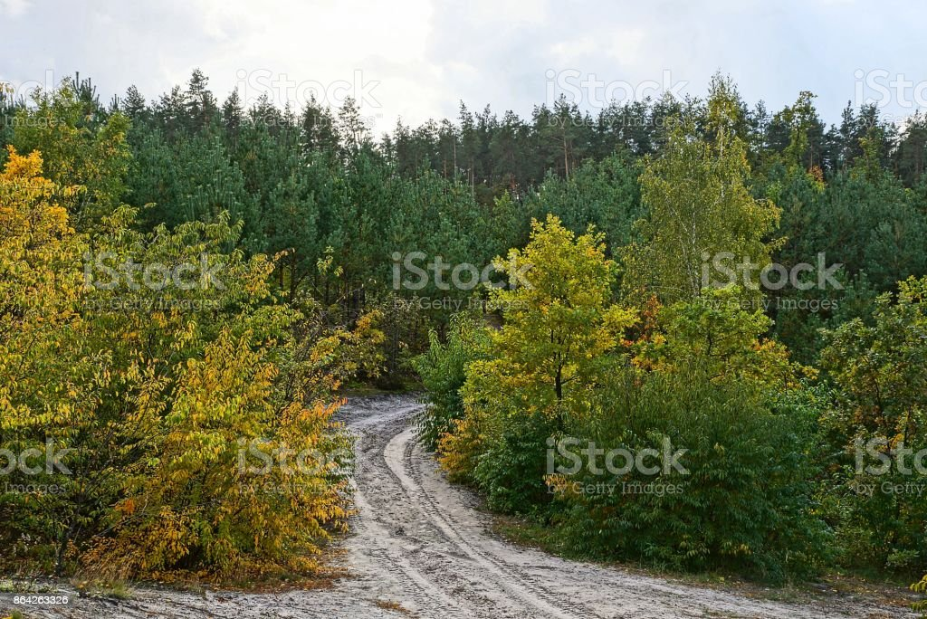 gray sandy road in a forest among trees royalty-free stock photo