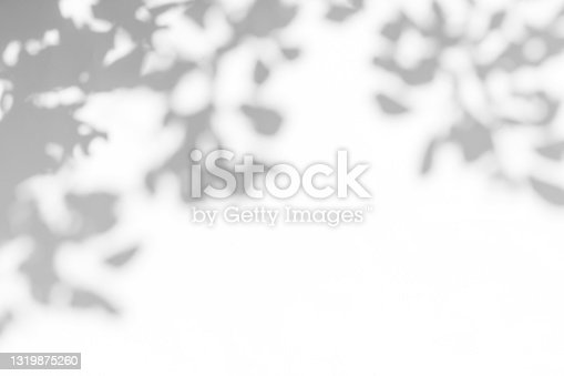 istock Gray shadow of leaves on a white wall 1319875260