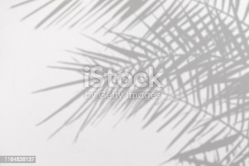 Gray shadow of natural palm leaves on a white concrete textured wall with roughness and irregularities. Abstract neutral nature tropical concept background. Copy space.