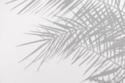 Gray shadow of natural palm leaves on a white concrete textured wall