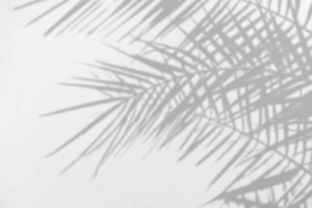 白いコンクリートのテクスチャー壁に自然なヤシの葉の灰色の影 - 木漏れ日 ストックフォトと画像