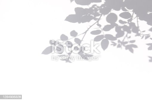 istock Gray shadow of  rose leaves on a white wall 1254935328