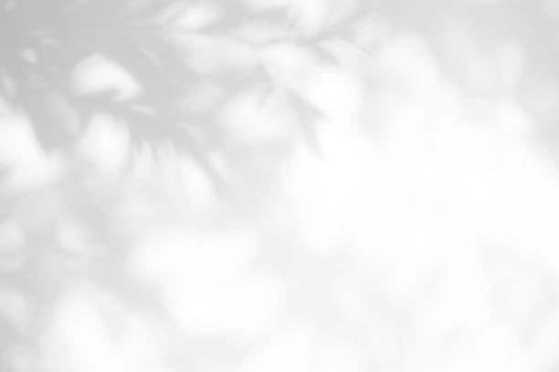 gray shadow of the leaves on a white wall - light through trees stock pictures, royalty-free photos & images
