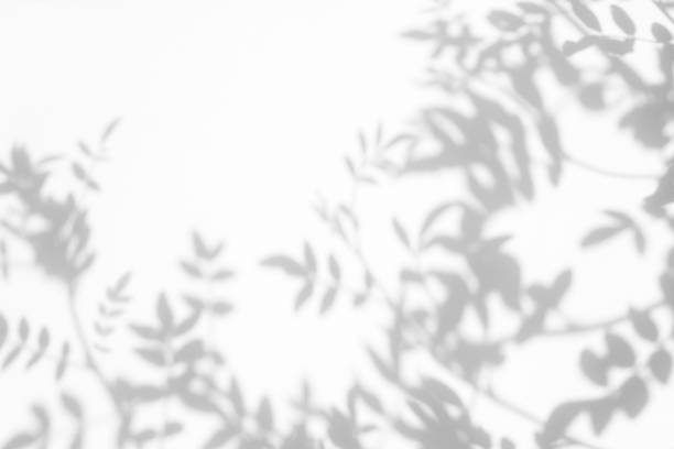 gray shadow of the leaves on a white wall - тень стоковые фото и изображения
