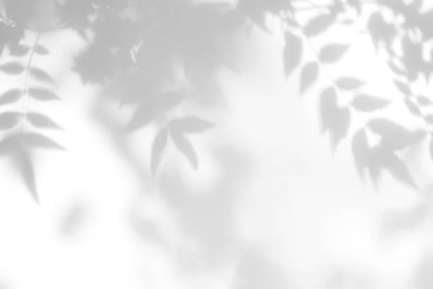 beyaz bir duvarda yaprakları gri gölge - dal bitki bölümü stok fotoğraflar ve resimler