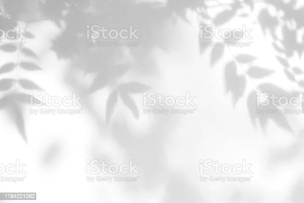 Photo of Gray shadow of the leaves on a white wall