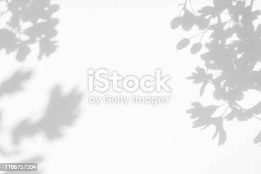 Gray shadow of the hawthorn tree leaves on a white wall. Abstract neutral nature concept blurred background. Space for text.