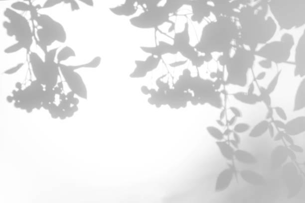 白い壁の葉の灰色の影 - 木漏れ日 ストックフォトと画像