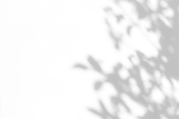 gray shadow of the leaves on a white wall. - тень стоковые фото и изображения