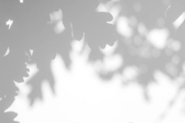 白い壁にオークの木の葉の灰色の影 - 木漏れ日 ストックフォトと画像