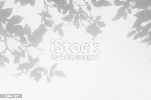 istock Gray shadow of the wild roses leaves and flowers on a white wall 1169639821