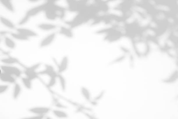 Gray shadow of the wild roses leaves and flowers on a white wall Overlay effect for photo. Gray shadow of the wild roses leaves on a white wall. Abstract neutral nature concept blurred background. Space for text. shadow stock pictures, royalty-free photos & images