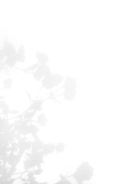 Gray shadow of the wild roses leaves on a white wall picture id1178425642?b=1&k=6&m=1178425642&s=612x612&w=0&h=ck us3arwdjxbzmpynpjpo747ctgkrjuzbeshbpyhik=