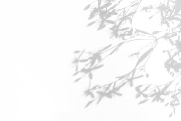 gray shadows of delicate flowers on a white wall - тень стоковые фото и изображения