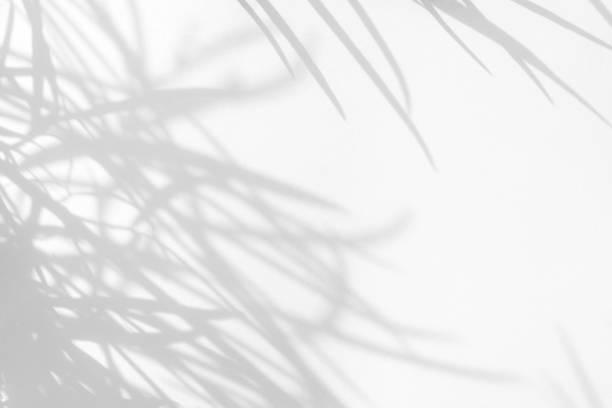 白い壁の繊細な草の灰色の影 - 木漏れ日 ストックフォトと画像