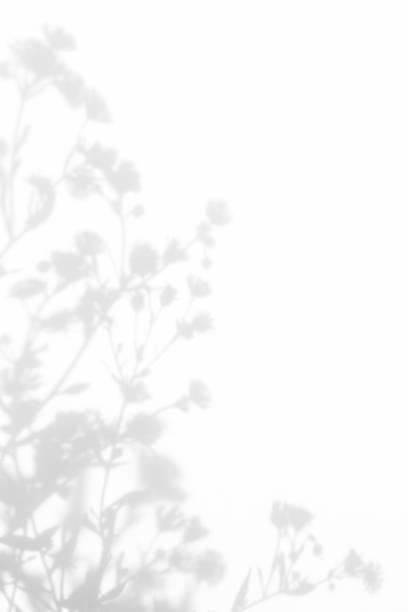 gray shadows of the flowers and grass - тень стоковые фото и изображения