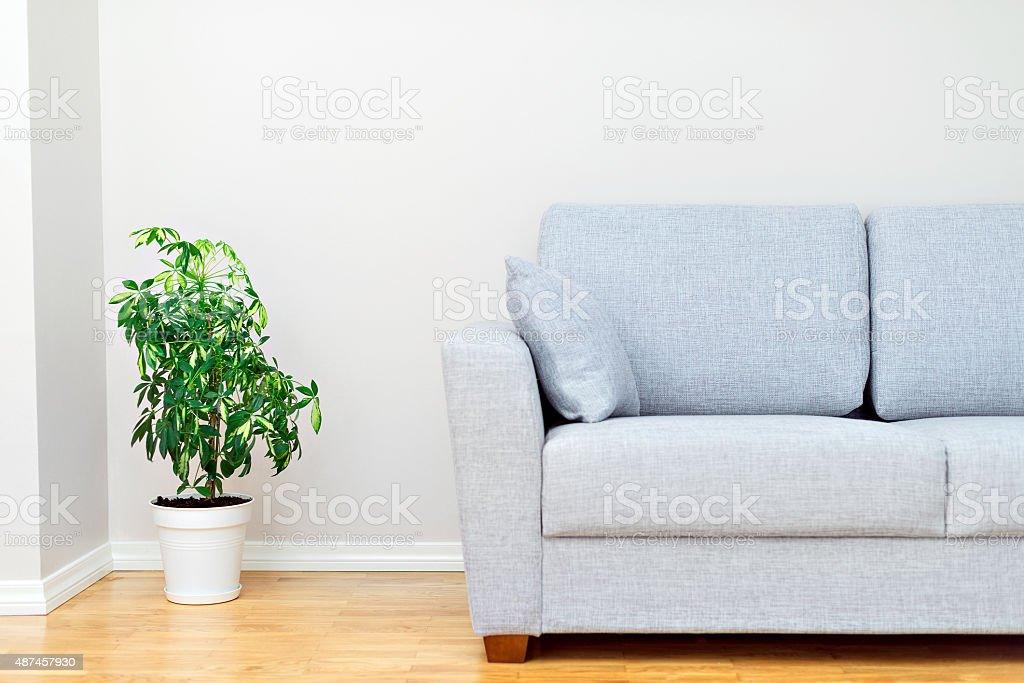 Gray sofa and green plant. Room interior. Gray sofa and green plant. Room interior. 2015 Stock Photo