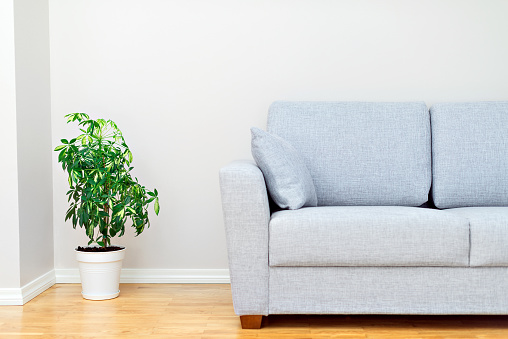 Gray Sofa And Green Plant Room Interior Stock Photo - Download Image Now
