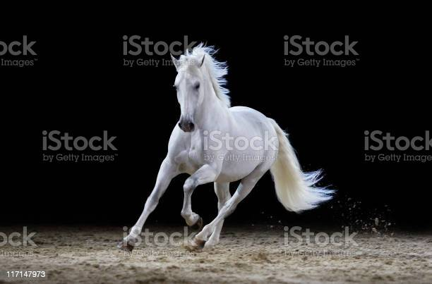 Gray stallion galloping picture id117147973?b=1&k=6&m=117147973&s=612x612&h=6bvv hdhwmojmsfysq3nelcjrzirb6t24ulynukcosi=