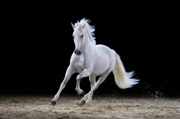 Gray stallion galloping picture id117147973?b=1&k=6&m=117147973&s=612x612&w=0&h=o184hrh86l1fvapbkjizk8eokqzheskdznmwkxfd8nm=