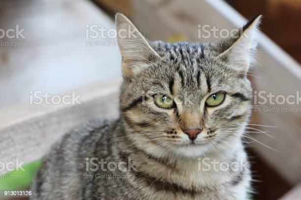 Gray street cat against the background of wooden construction picture id913013126?b=1&k=6&m=913013126&s=612x612&h=e1ko7itoppzmh4j3fvkihi8iwdsm7nrzvbb2srvapls=