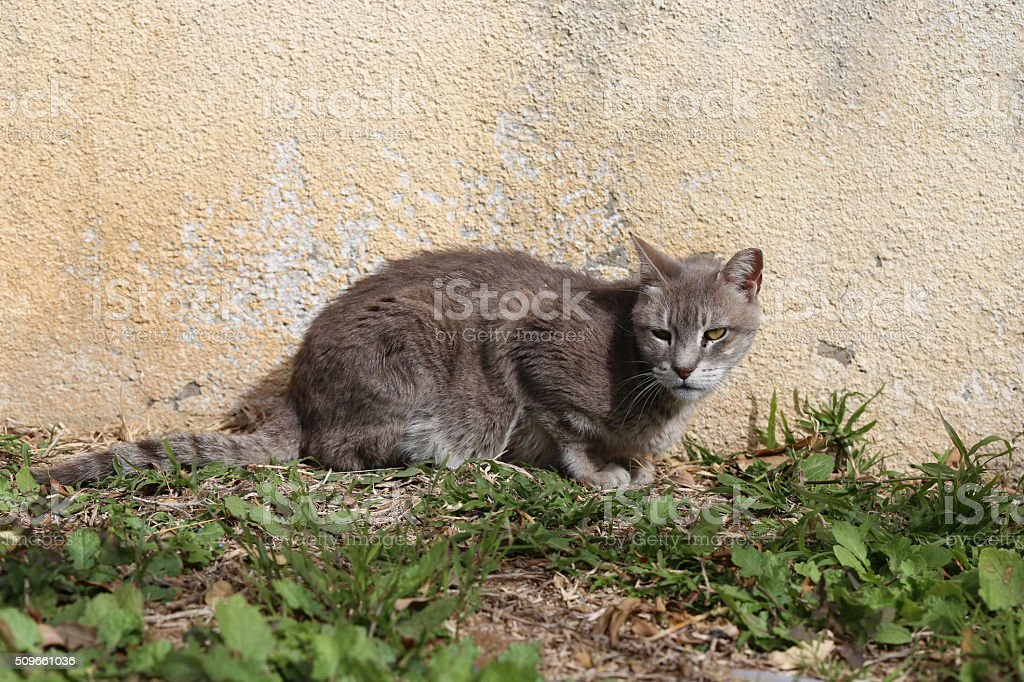 Gray Street Cat stock photo