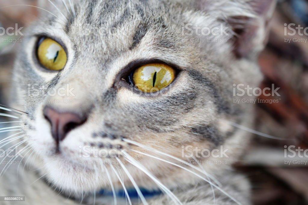 Gray Tabby Cat Close Up Stock Photo IStock - 24 detailed close ups of animal eyes