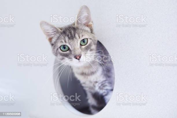 Gray tabby cat is looking out of a round window in a cat condo picture id1139565998?b=1&k=6&m=1139565998&s=612x612&h=c5q80ap01rwtck6k0o6v6m52gu3 jeprsvc7orqe1d4=