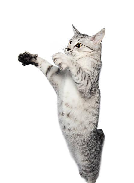 Gray tabby cat picture id509030969?b=1&k=6&m=509030969&s=612x612&w=0&h=pwychxi45cg5 iiuhj5 u 6e6yjvtrqr9vgszx2zyyw=