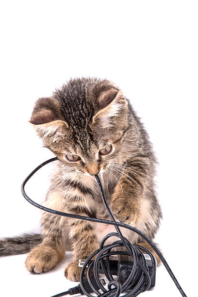 Gray tabby kitten chews the charger cable on white background picture id479554220?b=1&k=6&m=479554220&s=612x612&w=0&h=9bnnpwdx2zftvkqtolczopwrmihknsmg2nuicceaaoi=