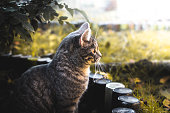 The photos were taken on a cold but bright autumn day in the backyard of the house in a small garden with fallen leaves and a playful neighbor's kitten, which is very funny running and very energetic. Kharkov, Ukraine.
