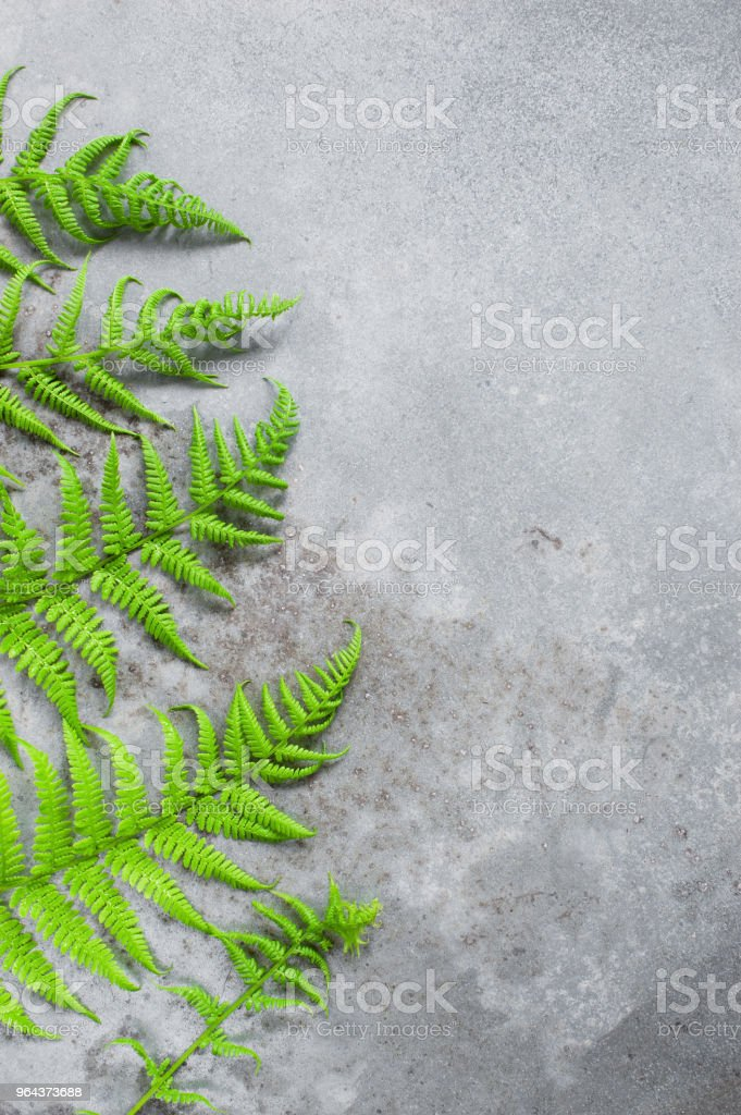 Grijze gestructureerde achtergrond met groene fern laat - Royalty-free Achtergrond - Thema Stockfoto