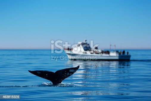 This is a photo of a gray whale's tail off the coast of Southern California with a group of onlookers off in the distance.