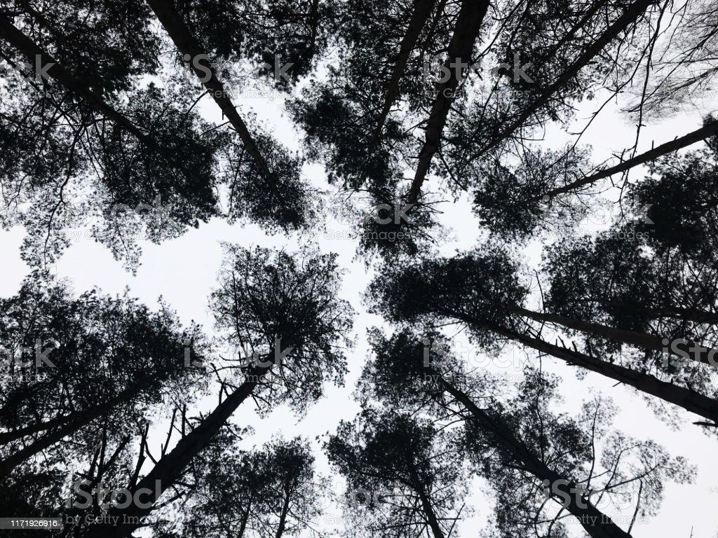 Foto De Floresta De Grayscale Olhando Para O Ceu Filiais De Arvore Com Folha Vista Em Perspectiva E Mais Fotos De Stock De Abstrato Istock