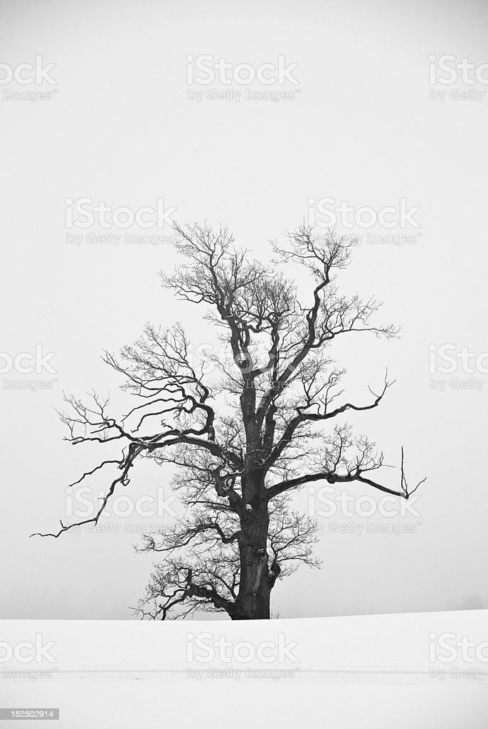 Grayscale tree on snow covered field royalty-free stock photo