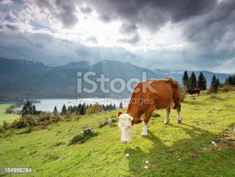 Grazing alpine cow in the mountains. Sunrays and Lake Bohinj in the background. Location: lake Bohinj, Julian Alps, Slovenia