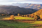 Grazing cows mountains landscape in morning at Cahecho village,Cantabria,Spain photo background