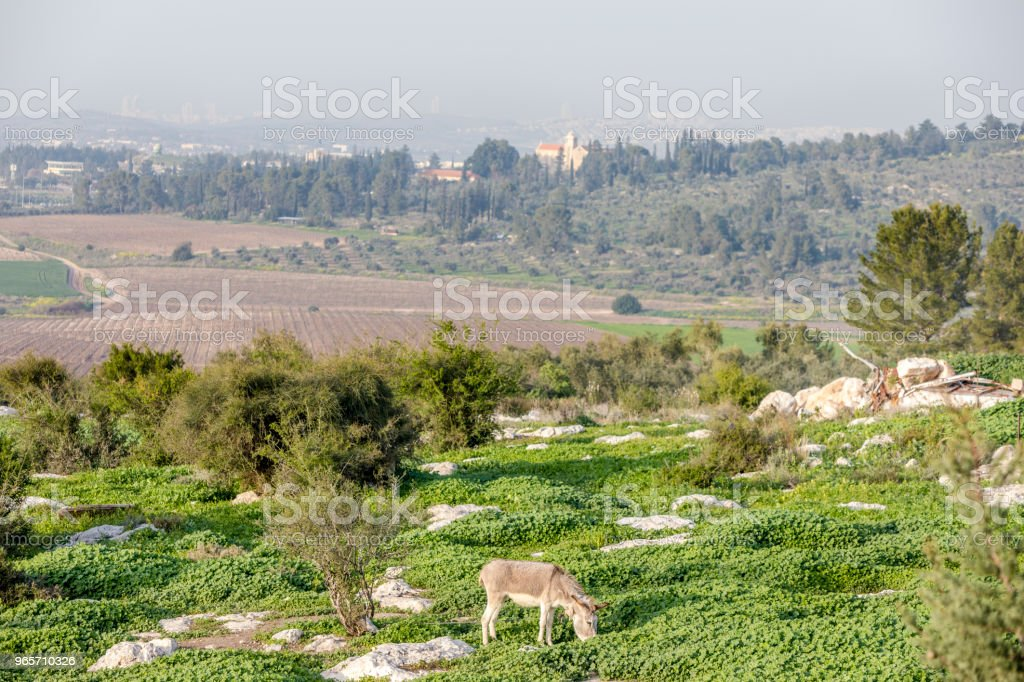 Grazing donkey and empty fields landscape - Royalty-free Agricultural Field Stock Photo
