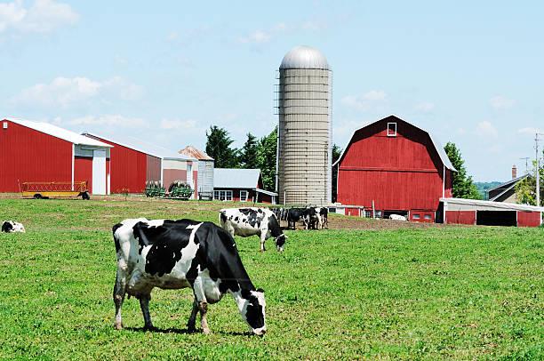 Grasen Holsteins – Foto