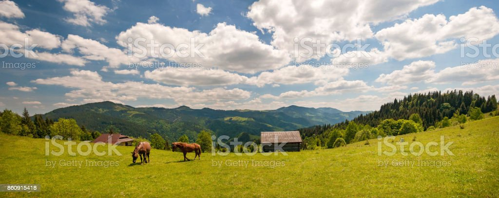 Grazing horse at high-land pasture at Carpathian Mountains in rays of sunset. stock photo