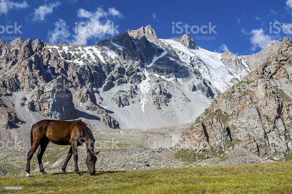 Grazing horse at sunny day in high snowy mountains stock photo