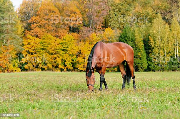 Photo of grazing horse in autumn