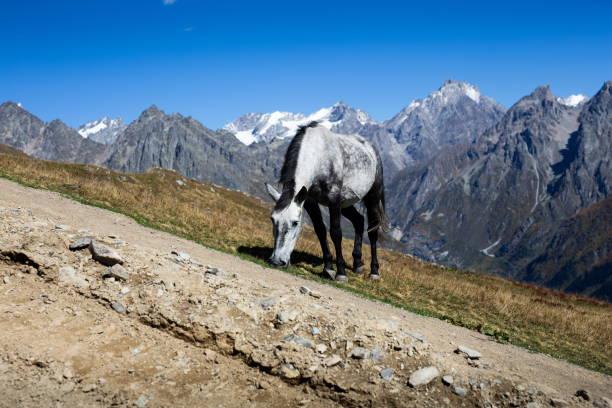 Weidepferd im Kaukasus – Foto
