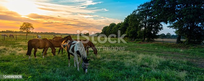 istock grazing horses in autumn on a horse pasture 1046993926