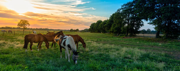 grazing horses in autumn on a horse pasture - horse stock pictures, royalty-free photos & images