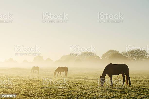 Photo of Grazing horses on a foggy morning