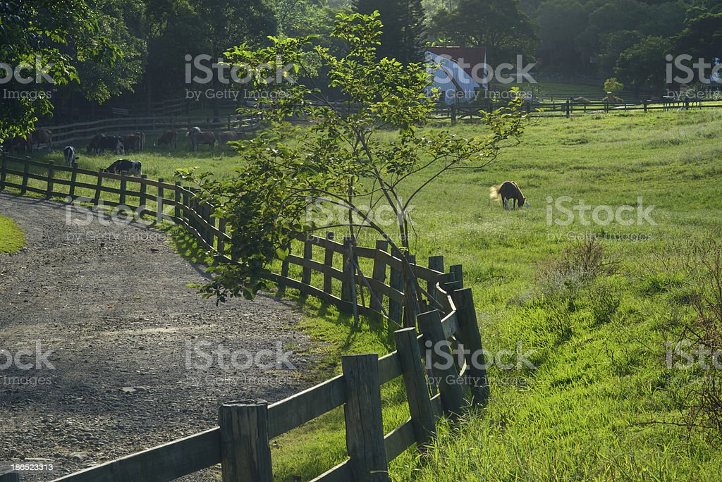 grazing land royalty-free stock photo