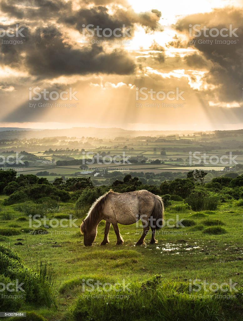 grazing wild ponny horse with dramatic sky stock photo